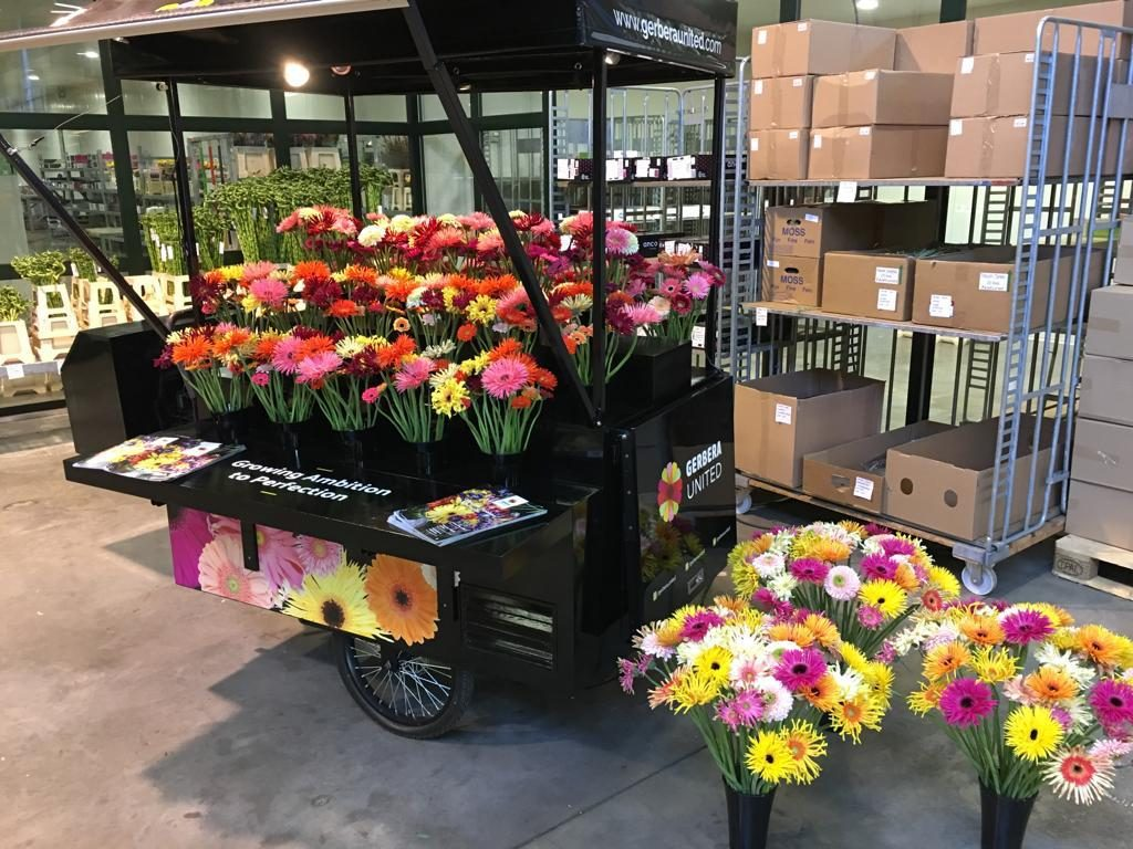 Gerbera United Flower Market